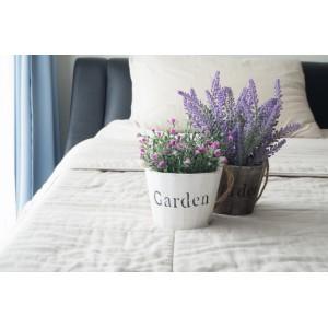 7 лучших комнатных растений для тех, кто плохо спит